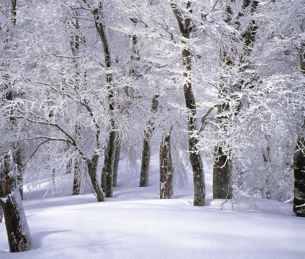 kx-forest-hyvaa-joulua